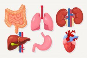 शरीर को साफ करने वाले अंग   Body Cleansing Organs in Hindi